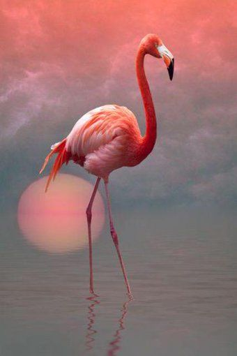 Beautiful flamingo image.