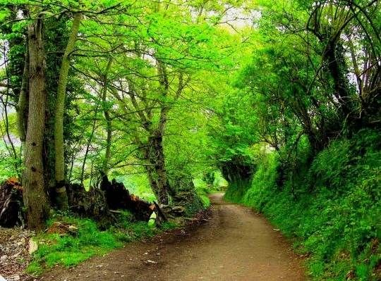 Camino de Santiago, hacia Triacastela, provincia de Lugo (España)