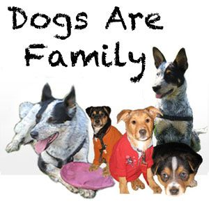 Our free dog clothes patterns includes patterns for extra small dog clothes up to large breed dog clothes. When you make them your self they are cheap small dog clothes.