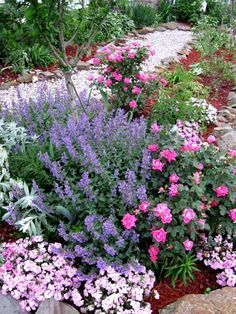 ~Double Pink Knockout Roses and Sage~