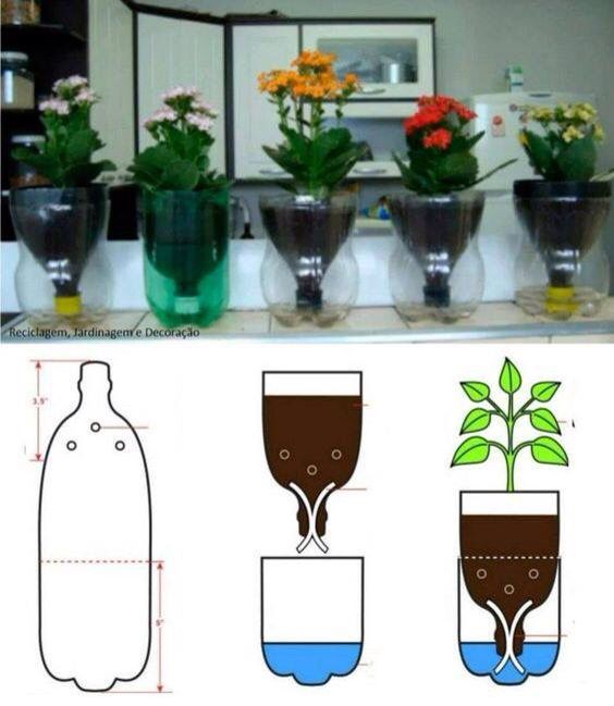mejores 32 imágenes de plants en pinterest | jardinería