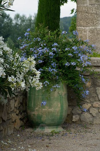 Plumbago, Designer Dominique La Fourcade, photo Clive Nichols