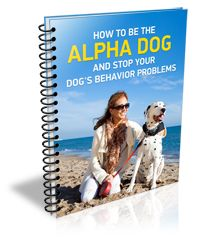 How to be the Alpha Dog and Stop Your Dog's Behavior Problems