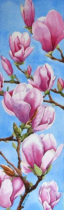Watercolor: Tulip Tree Artist/copyright: Brenda Jiral This is clearly a Magnolia !