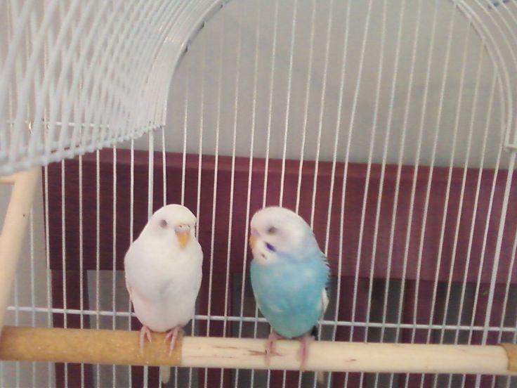 White:Violet Blue:Teil