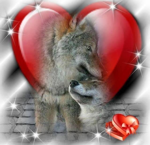 Открытки любимому с волками, розы фон поздравление