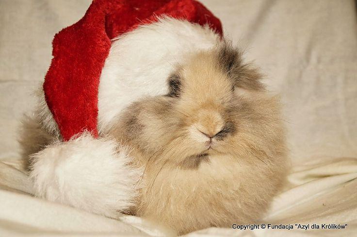 Bunny named Silk