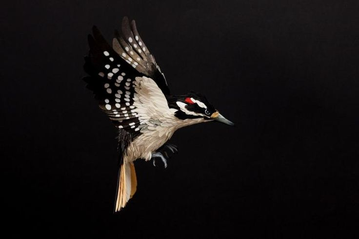 Диана Белтран Херрера и её бумажные птицы. - Ярмарка Мастеров - ручная работа, handmade