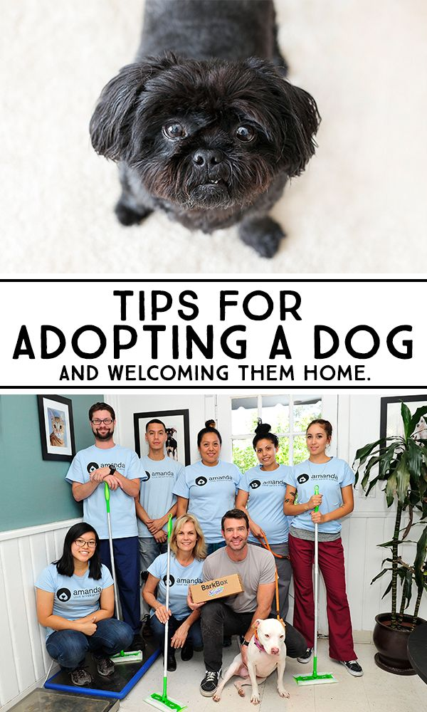 tips for adopting a dog home welcome home and keep in mind. Black Bedroom Furniture Sets. Home Design Ideas