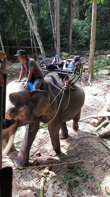 Elephant trekking on Koh Samui