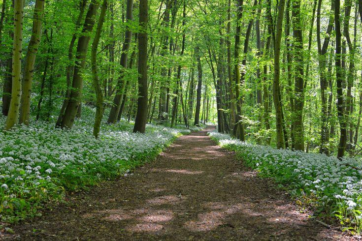 Lövsprickning i naturen