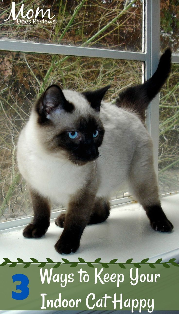 3 Ways To Keep Your Indoor Cat Happy Cat Training Cat Care Indoor Cat