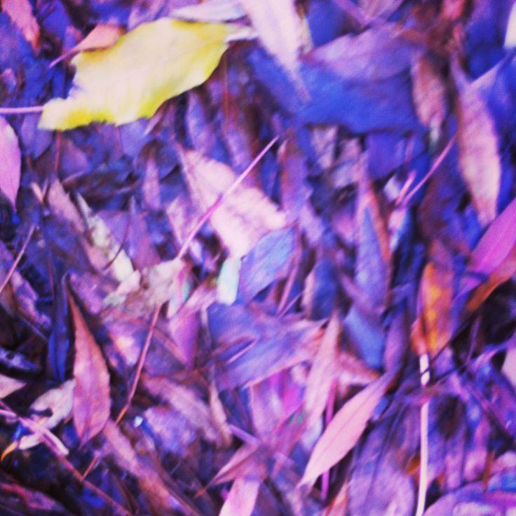 More of the same, yep leaves