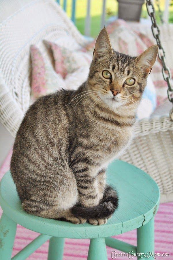 ❤️.....WHAT A BEAUTIFUL CAT.