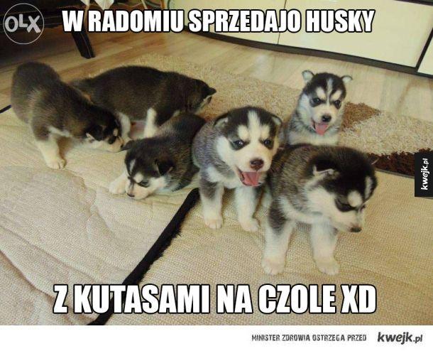 http://i1.kwejk.pl/k/obrazki/2015/07/cc4c9506e0f594ffd248f0e5d1c960d9.jpg