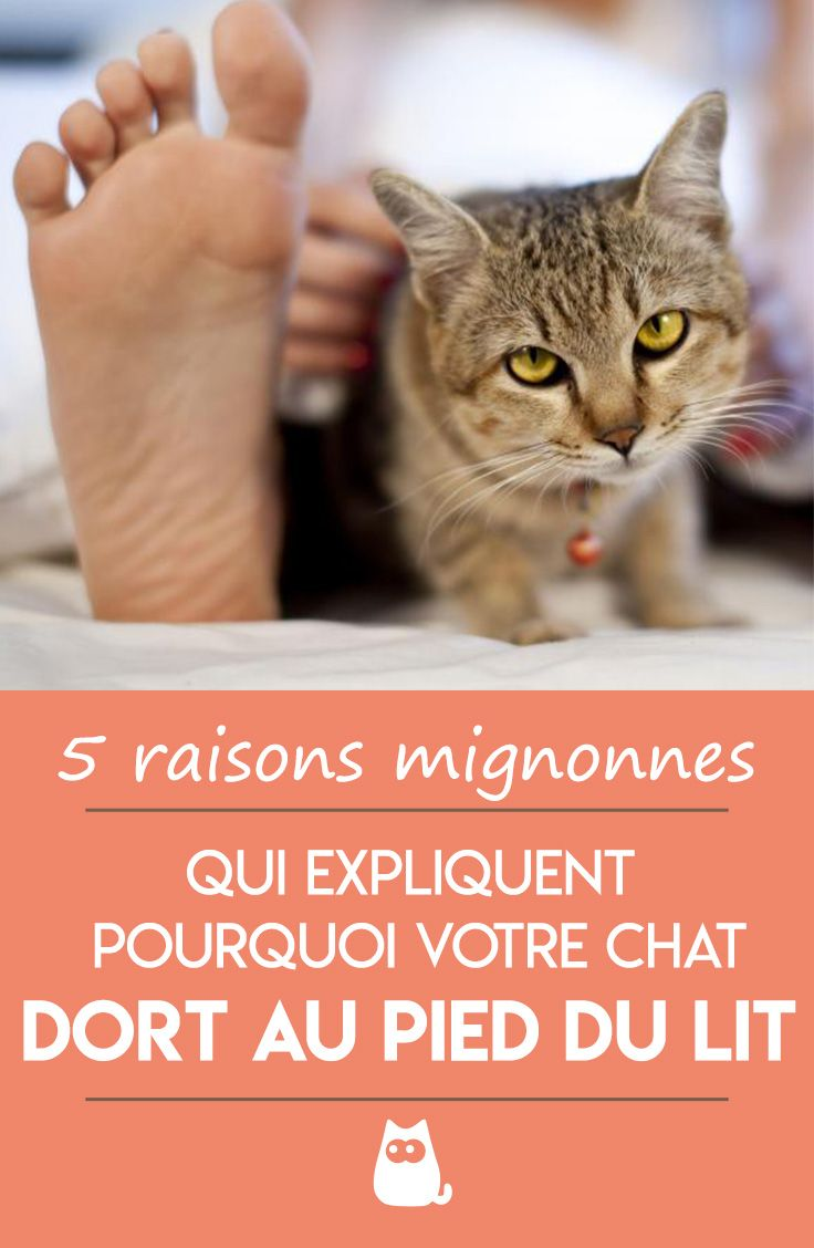 Mon Chat Dort Sur Mes Pieds pourquoi les chats aiment dormir au pied du lit