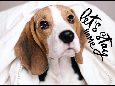 Как сфотографировать Бигля - YouTube#beagle #beagles #beaglesofinstagram #beaglelove #justbeagles #beaglemania #beaglelife #ilovemydog #puppyface #инстаграмзверят #WeeklyFluff #dogsofinstagram #houndsbazaar #topdogphoto #bestwoof #dogs_of_world #doglove #dogsofinstaworld #instapet #puppyoftheday #бигль #mydogiscutiest #aplacetolovedog #ohmydog #beagleloveit #worldofcutepets #videobeagle #videodog