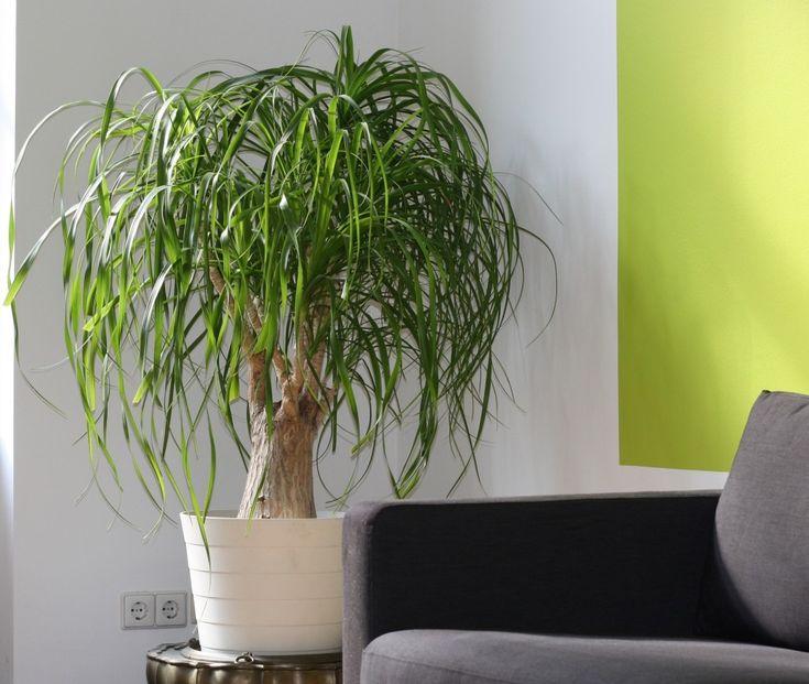 Risultati immagini per pianta interno | Piante