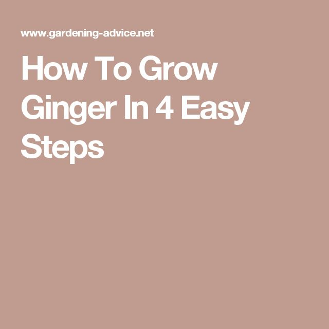 how to grow ginger in pot india