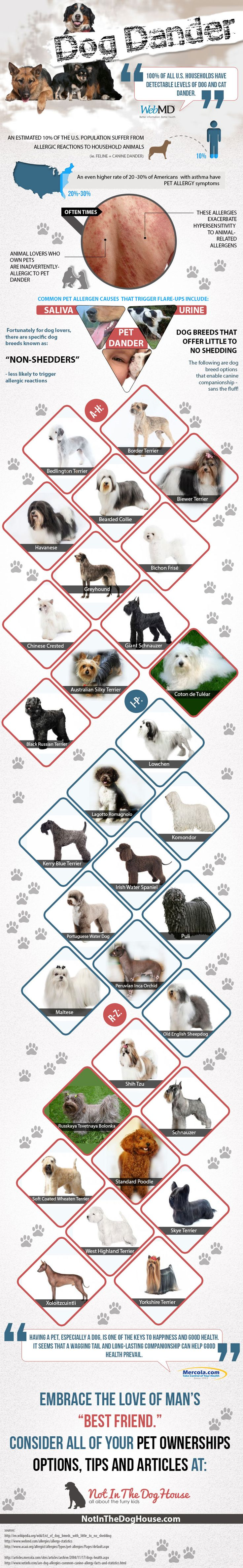 Doggone Dog Dander – Not With These Non-Shedders [Infographic] http://www.notinthedoghouse.com/doggone-dog-dander-non-shedders/