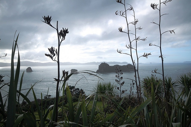 LocumLENS WINNER!  A strikingly beautiful perspective of Cathedral Flax overlooking the ocean in Hahei, New Zealand. Photo courtesy of Dr. Stewart Cameron.