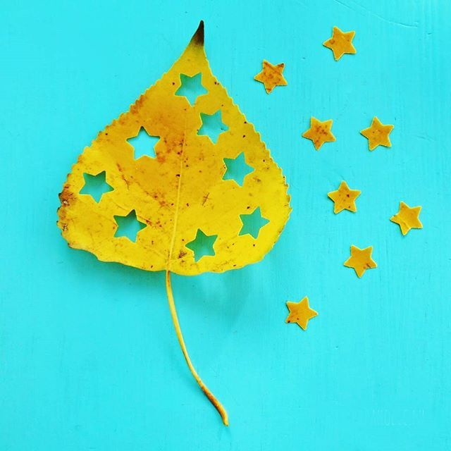 Confetti made from autumn leaves.