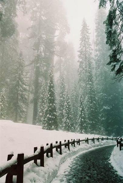 Winter~Green