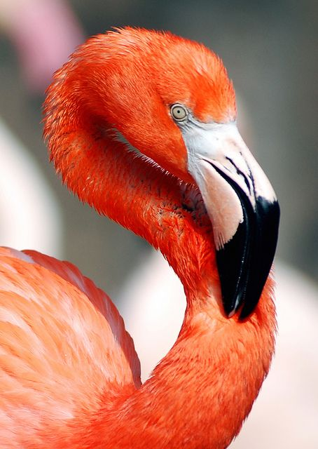 Flamingo photo by CHERL KIM, Everland Zoo, Korea // #photography #bird #color