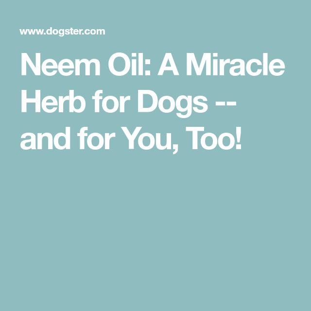 Neem Oil: A Miracle Herb for Dogs -- and for You, Too!
