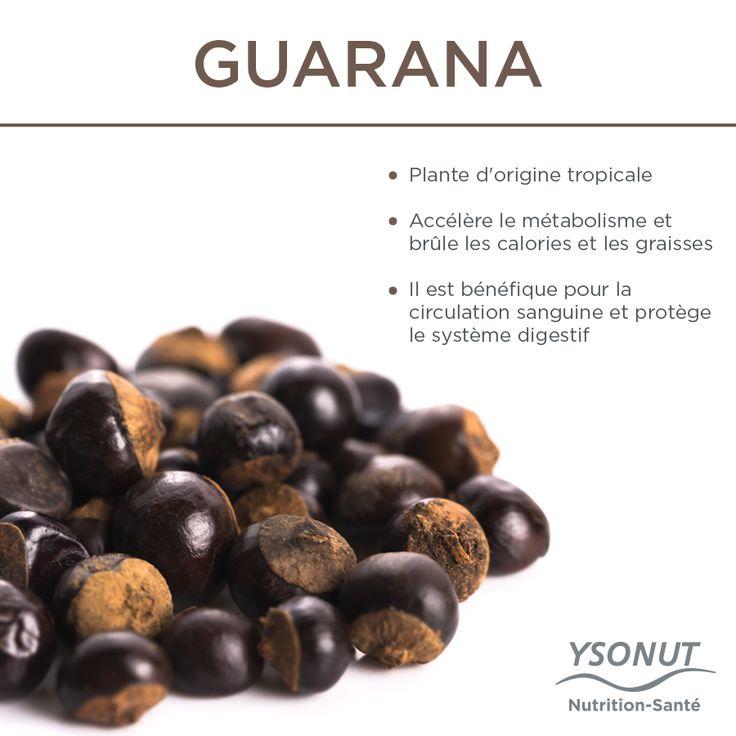 Qu'est-ce que le Guarana ?