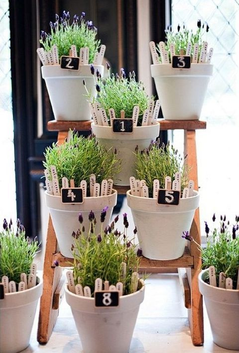 Not only cut plants can give joy but also potted ones! Use potted flowers, succulents, various greenery for making centerpieces, arches, lining the aisle ...