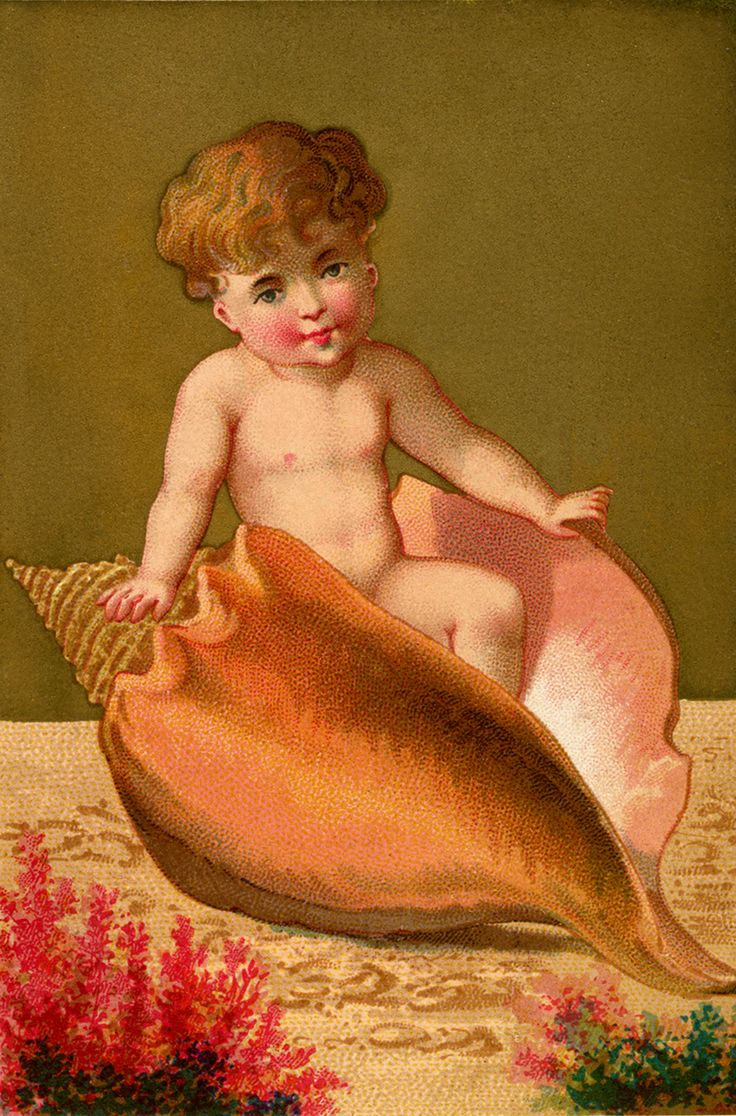 Vintage Conch Shell Baby Image! - The Graphics Fairy