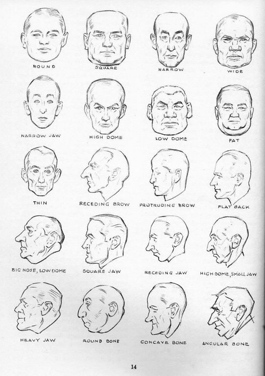 Character Design Head Shapes : Face profile types art reference non specific