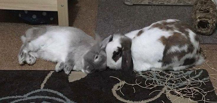 Bella and Albert