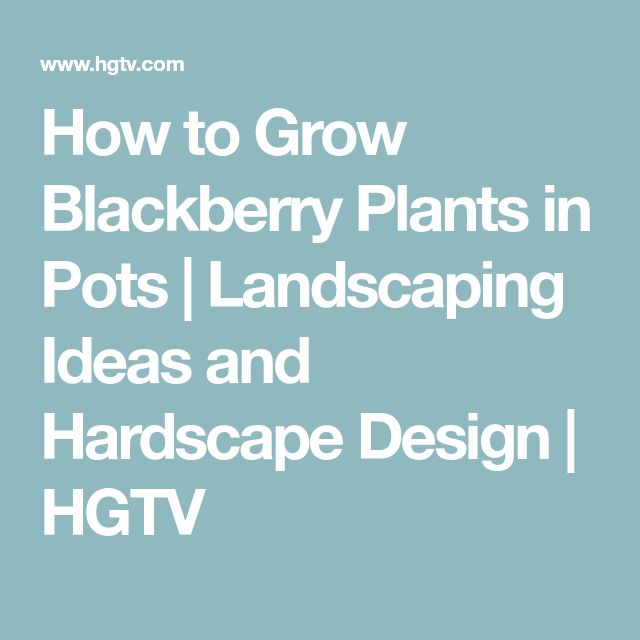 How to Grow Blackberry Plants in Pots | Landscaping Ideas and Hardscape Design | HGTV