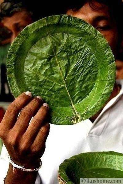Green Leaves Inspire Eco Friendly Modern Tableware and Provide Material for Traditional Plates