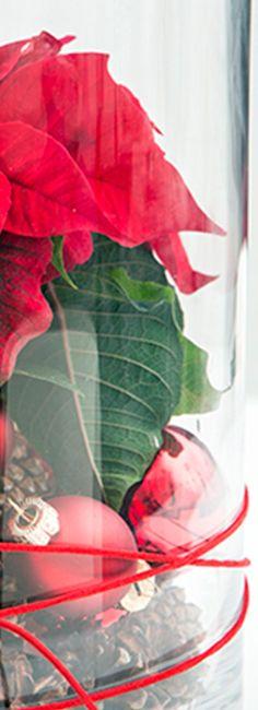 Pour donner l'esprit de Noël à votre table de fêtes, réalisez un joli centre de table avec un vase décoré de pommes de pin et de quelques boules pour mettre en majesté le fameux poinsettia.