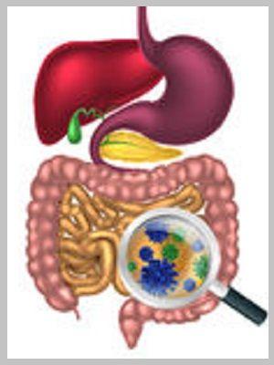 Als we het over de darmflora hebben, is een ding duidelijk geworden: onze darmflora bepalen grotendeels ons gewicht. Ze helpen bij de vertering van voeding en zetten het om in energie en vet. Wanne…