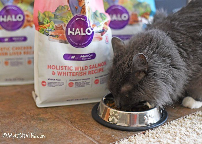 Halo Cat Food Has Sophie Purring Loudly Cat Food Purring Food Out
