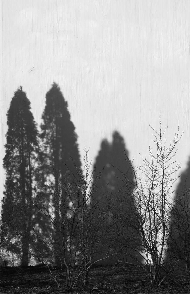 shadow forest by minnamaria.deviantart.com on @deviantART