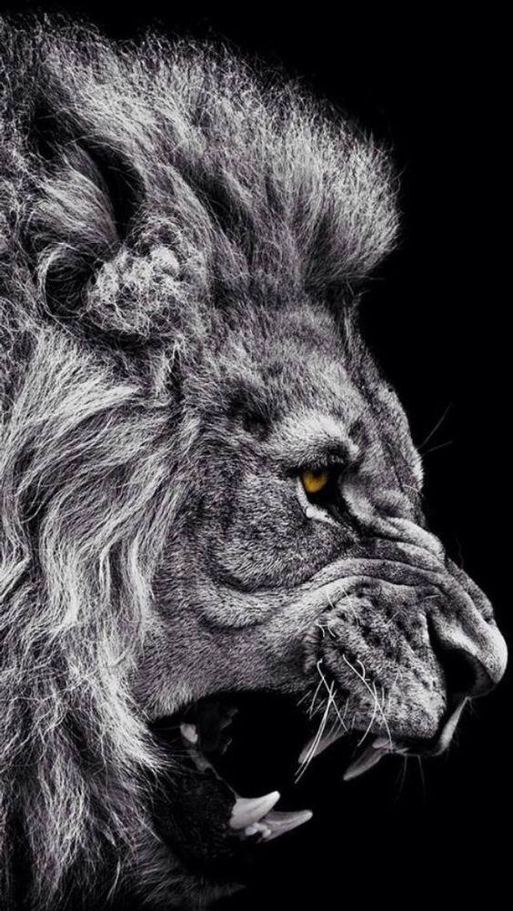 lion_mane_big_cat_grin_93320_640x1136 사자 배경화면, 동물 및 사자 문신