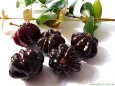 Brazilian Cherry - Black