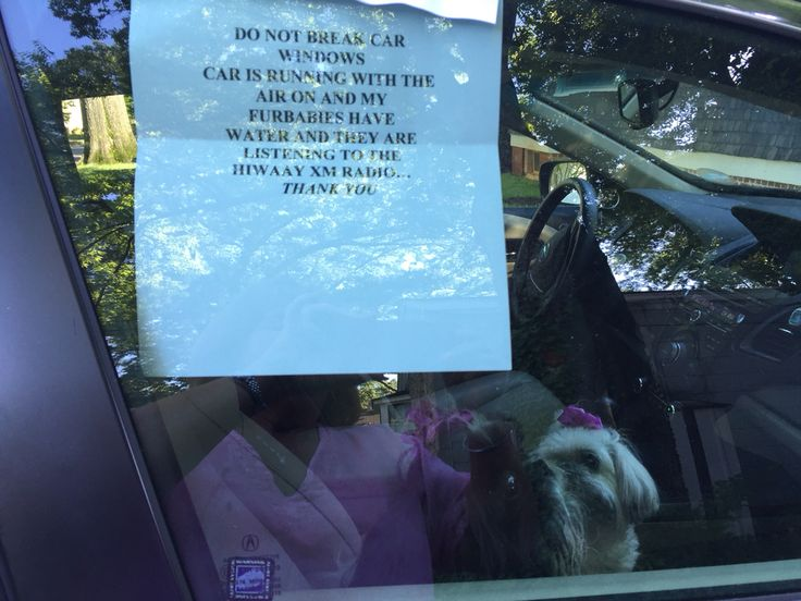 Great way to protect your Furbabies and your car when you travel with them in warm weather.