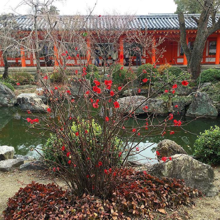 Доброе утро из Киото! :) Сегодня наконец по-зимнему морозно а завтра под утро даже обещают снег. Зимние сады Старой столицы особенно прекрасны в такие моменты. Из-за теплой зимы кое-где уже распустились первые сливы и химонанты. На этом фото из сада Павильона 33 пространств - аленькие цветочки айвы традиционные для этого сезона. #Киото #Япония #цветы #цветок #цветочки #сады #парки #зима #японскийсад #весна #айва #слива #абрикос #химонант