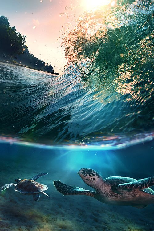 tropical paradise with turtles - Bay of Bengal (by Vitaliy Sokol)
