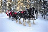 """Horse Drawn Sleigh Rides Horse Drawn Sleigh Rides in Kelowna, BC: """"Come aboard an old-fashioned horse drawn sleigh for an unforgettable experience in the winter wonderland of Big White. Cozy up under a blanket and enjoy hot chocolate as you glide through snow covered forest trails, a true Canadian winter adventure. A horse drawn sleigh ride is an outdoor adventure that can be enjoyed by all ages.""""  *Please Note: The last day for Sleigh Ride bookings will be on Saturday, April 5th, 2014."""""""