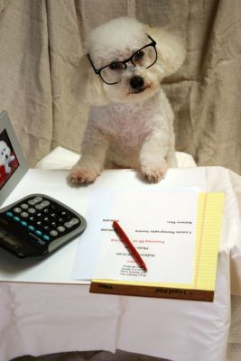 Can I Claim Service Dog Expenses On My Taxes