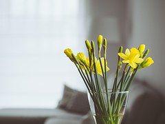 Flowers, Vase, Interior, Home, Smell