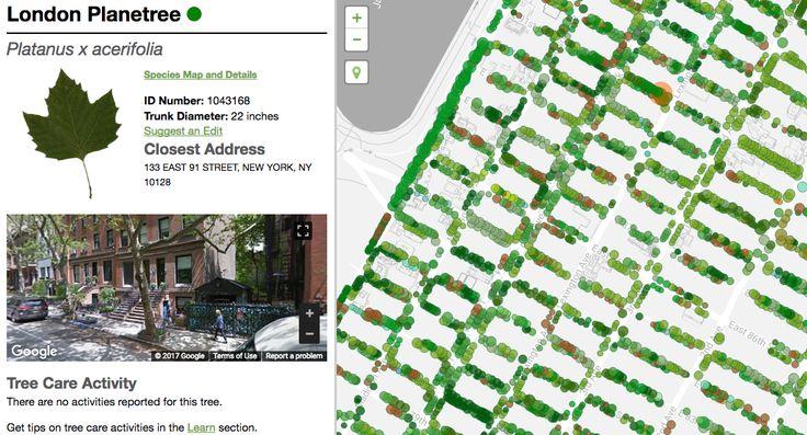 Nova York, a cidade mais populosa dos Estados Unidos, é conhecida como selva de pedra mas também é repleta de árvores. O NYC Parks, departamento de parques e recreação de Nova York, lançou um site que mostra todas as árvores da cidade mapeadas, classificadas por tipo e espécie, carregando informações como a importância de cada uma delas para o governo e o meio ambiente.