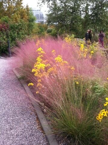 Muhly Grass. It grows to about 3 feet high and wide. Pink Muhly makes a great border or edge plant. It combines well with pink-flowering Echinacea, Sedum 'Autumn Joy,' and other ornamental grasses.
